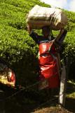Red apron.jpg
