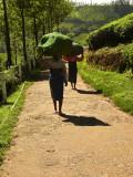 Tea carriers.jpg