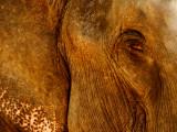 Elephant eye.jpg