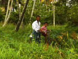 Father and son amongst green.jpg