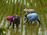 In the rice paddies.jpg