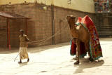 Temple camel.jpg