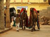 Procession of temple animals.jpg
