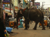 Elephant in the streets of Trichy.jpg