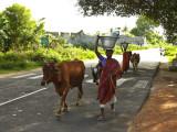On the road in TN.jpg