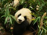 Chengdu Part 8