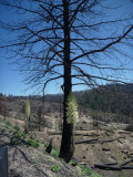 Station Fire Regrowth