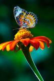 butterfly-006884.jpg