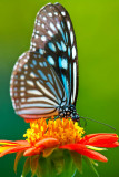 butterfly-006890.jpg
