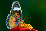 butterfly-006897 1.jpg