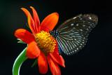 butterfly-006905.jpg