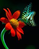 butterfly-006916.jpg