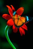 butterfly-006919.jpg