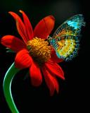 butterfly-006917.jpg