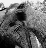 Chiang Mai Camp Elephant