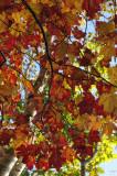 Fall's Fire