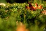 Leaf Wide Open