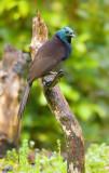 Papua New Guinea 2009