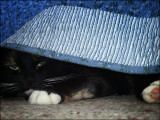 Hiding Under the Bed
