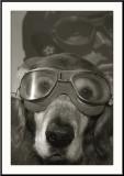 Dog of the Sky
