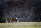 Equine Morning