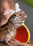 The Easter lizard?