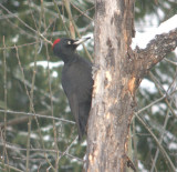 Woodpeckers, Toucans, Honeyguides