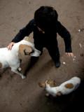 Rahil and two strays, Varanasi (2008)