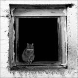 Katt i vindu