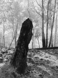 Stump (infrared)