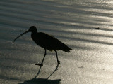 Beach birdwalk