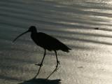 Beach birdwalk