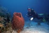Bob with giant barrel sponge