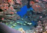 Reef Scene.jpg