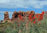 Orange flowers near the Cave area.