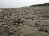 Yumurtalik:  Mar and April 2008