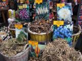 Bloemenmarkt's bulbous bounty