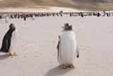 Penguins, penguins and people everywhere