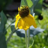 sunflowers 02 detail a