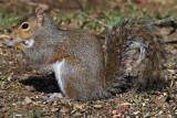 squirrelIMG_4117.jpg