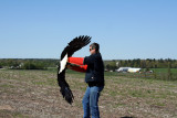 Eagle release May 2009