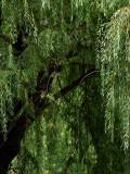 My Favorite Tree Envelopes Me.jpg
