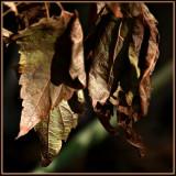 Copper Leaves.jpg