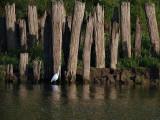 Egret and the Pillings.jpg