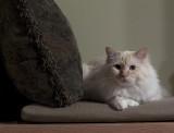 Milo on the Bench.jpg