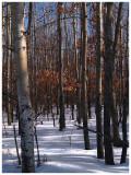 Great Winters Day Woods 1.jpg