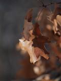 Leaves in Winter.jpg