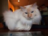 Cat in a Box Milo.jpg