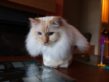 Cat in a Box Milo 2.jpg