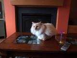 Cat in a Box Milo 4.jpg